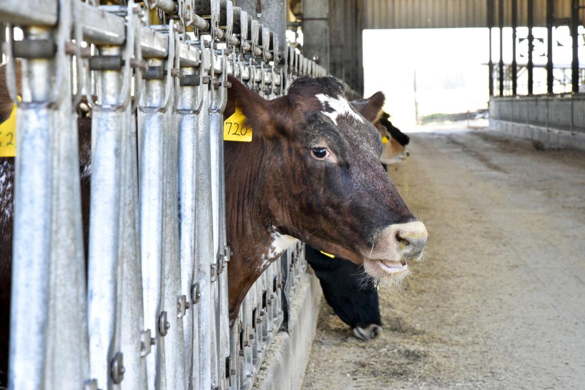 Bamberg Dairy