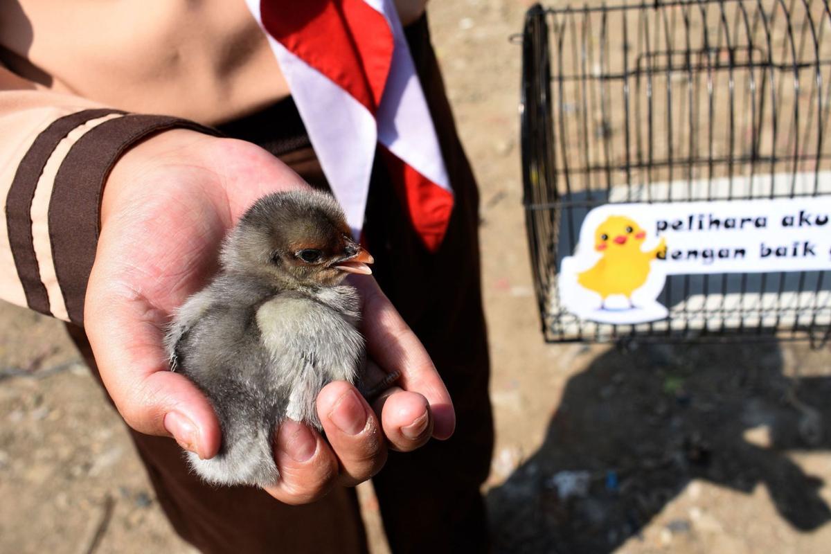 'Chickenization'