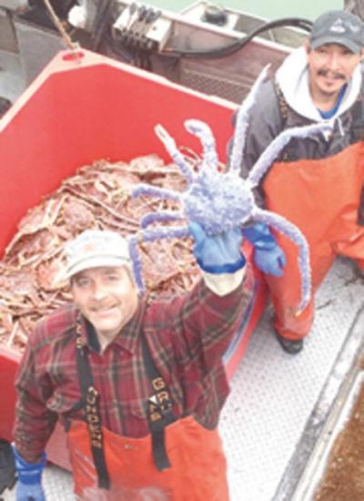 Blue Red King Crab