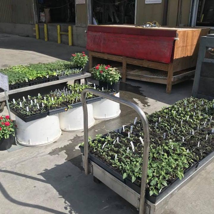Plants & Vegetables