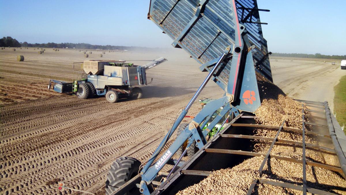 100219 clemson drought harvest 1