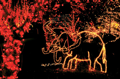 lights before christmas - Riverbanks Zoo Christmas Lights