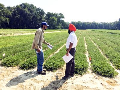 100719 FARM peanut field day