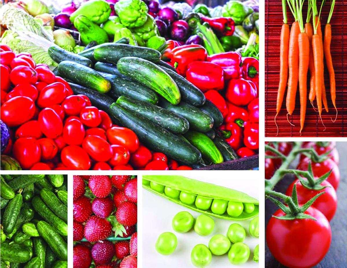 Vegetables, market illustration (copy)