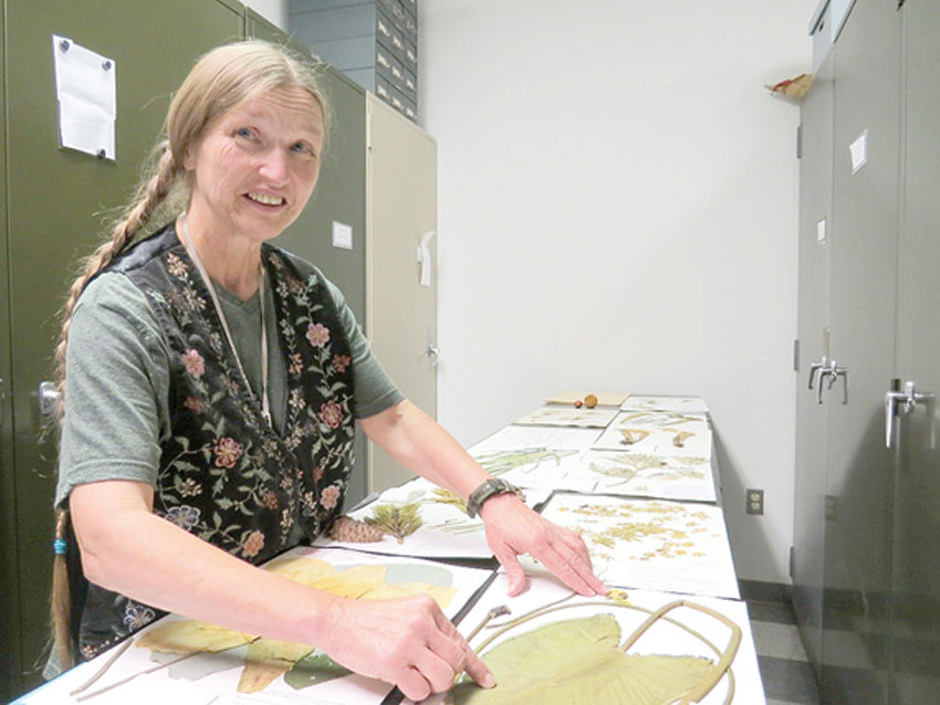 Clemson herbarium