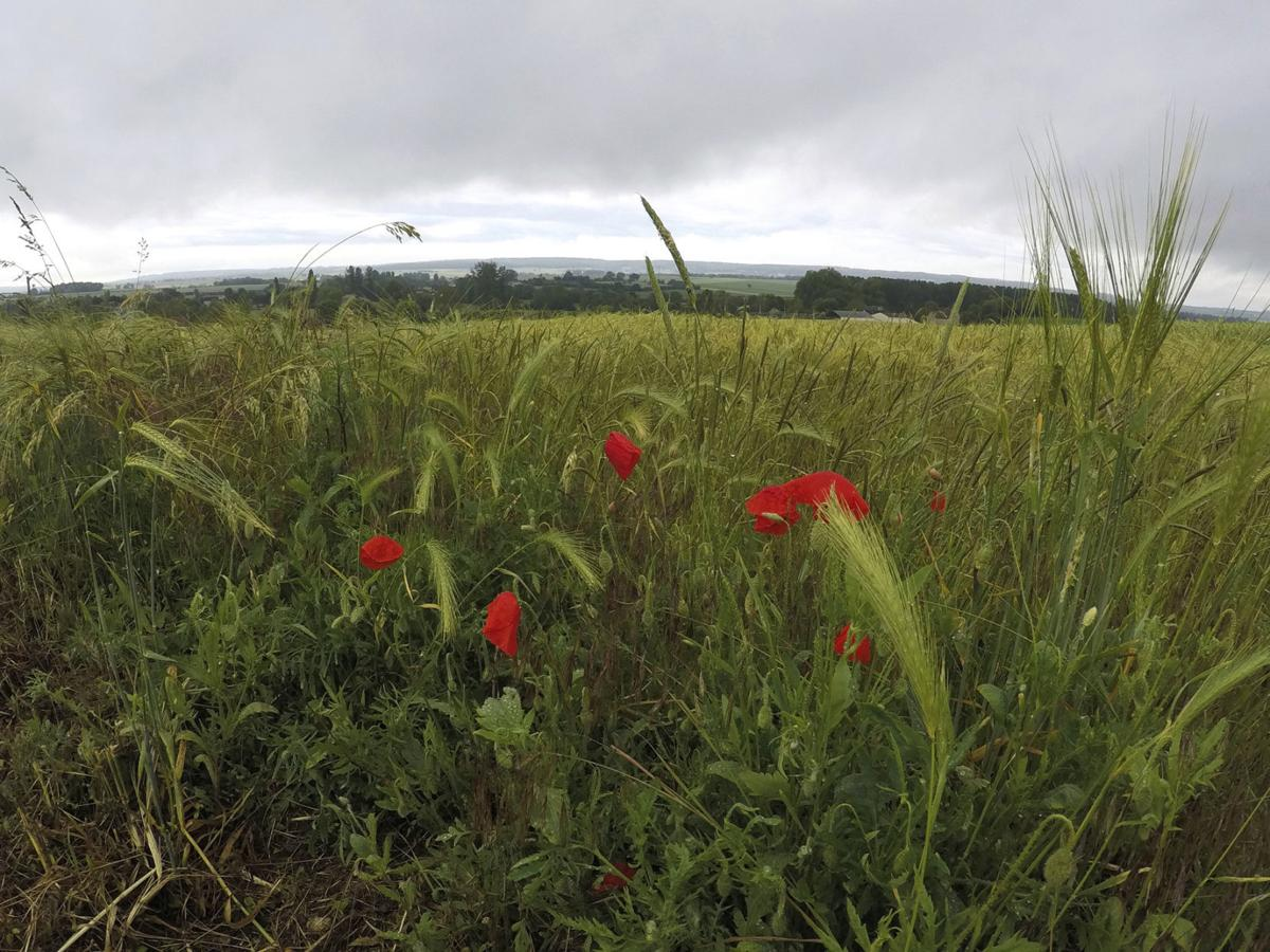South of D-Day beaches, another slaughter is remembered