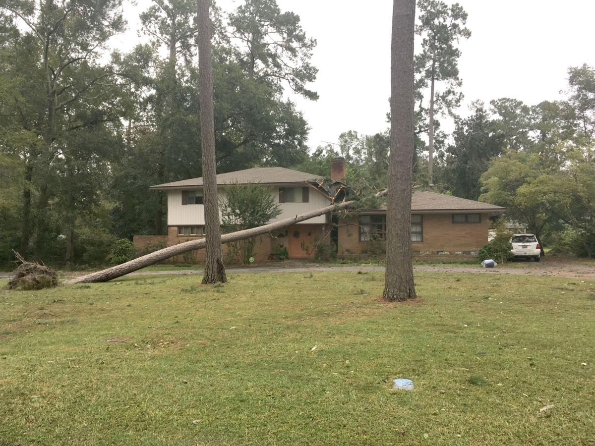 Tree on house on McCoy St in Holly Hill