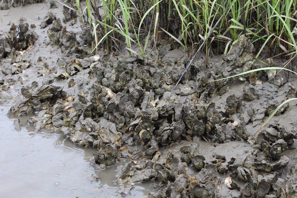 FARM clemson waterways 2.jpg