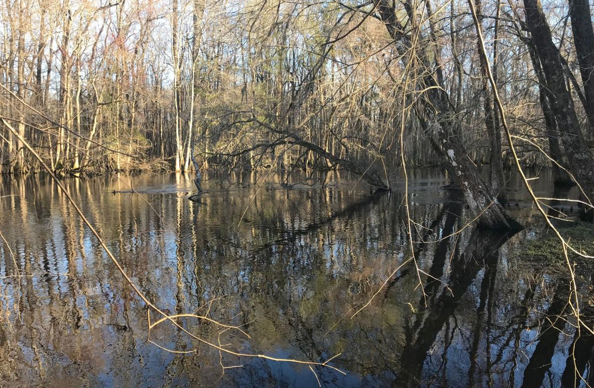Edisto River cleanup