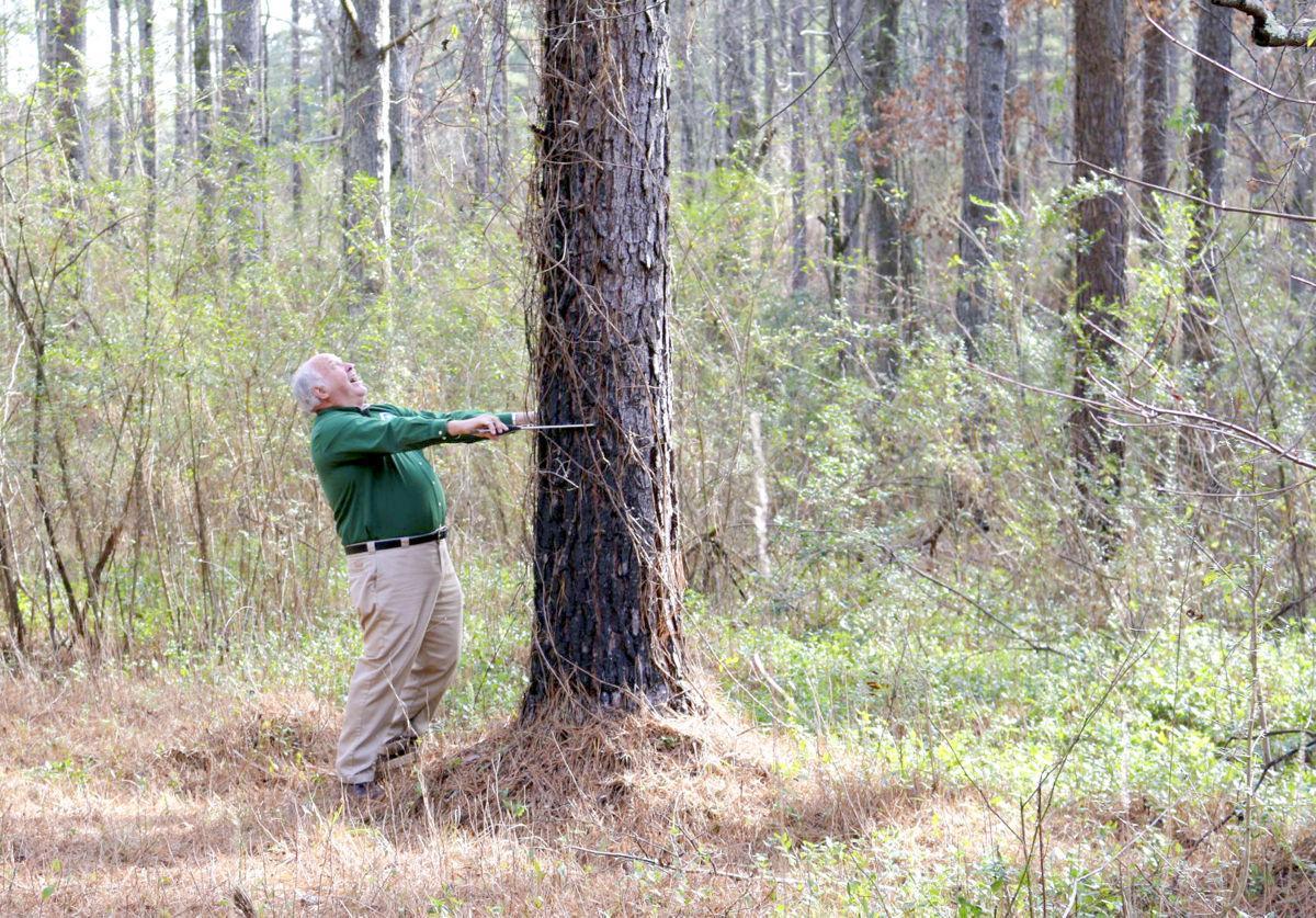MON farm pine trees