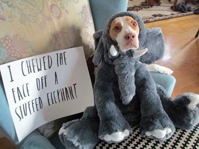 Pets-Dog Shame