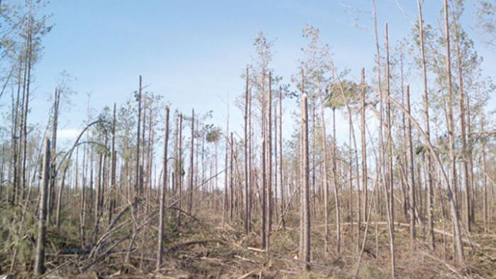 AFTER THE STORM: Timber owners urged not to rush decisions
