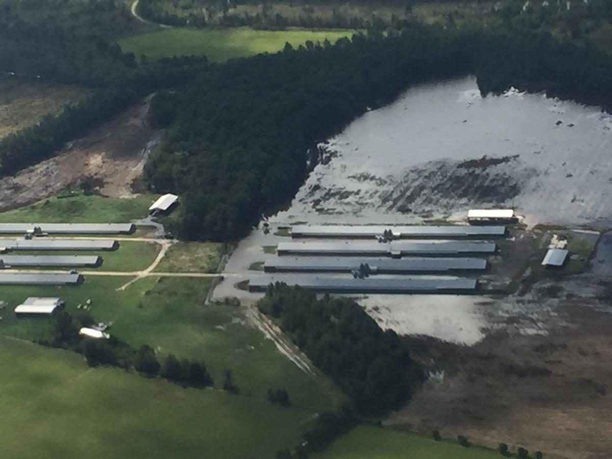 Clarendon poultry farm