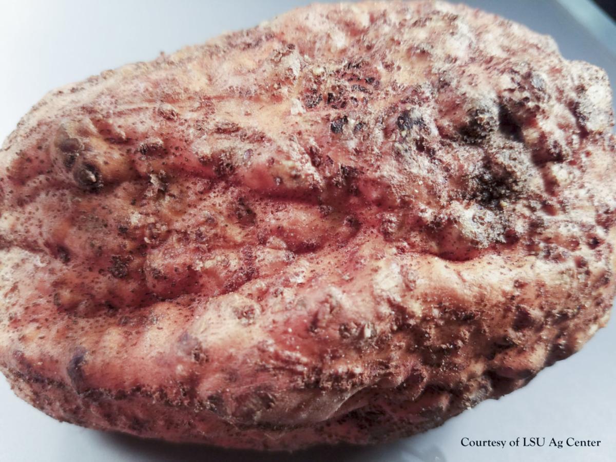FARM clemson nematodes