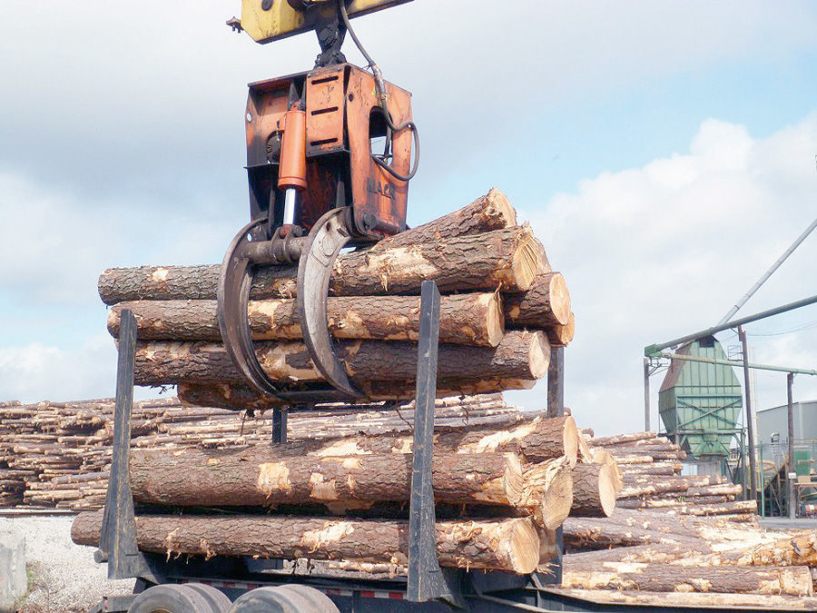 LIBRARY Timber production