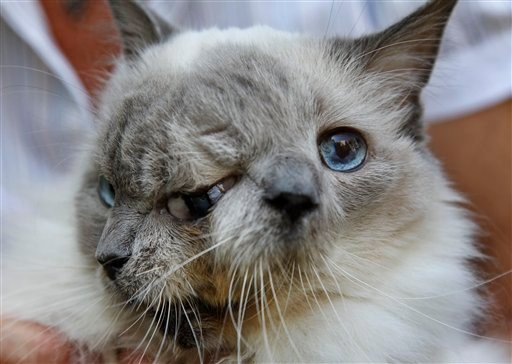 Two Faced Cat