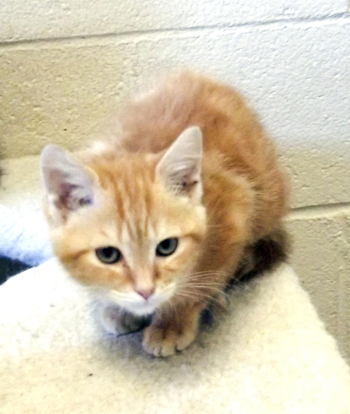 081515 SPCA Pet Corner Sonny
