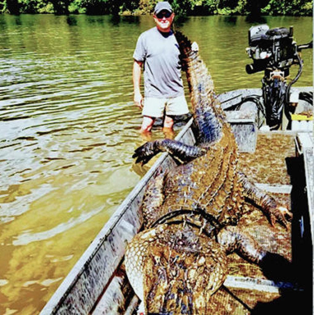 Big Lake Marion gator 2019