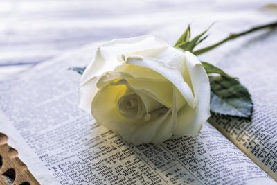 Flowers for Bibles illustration