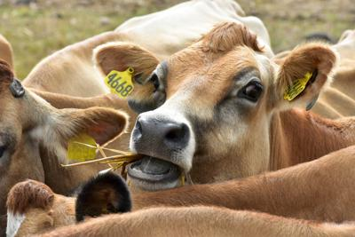 Dairy Farm (copy)
