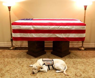 George HW Bush Service Dog