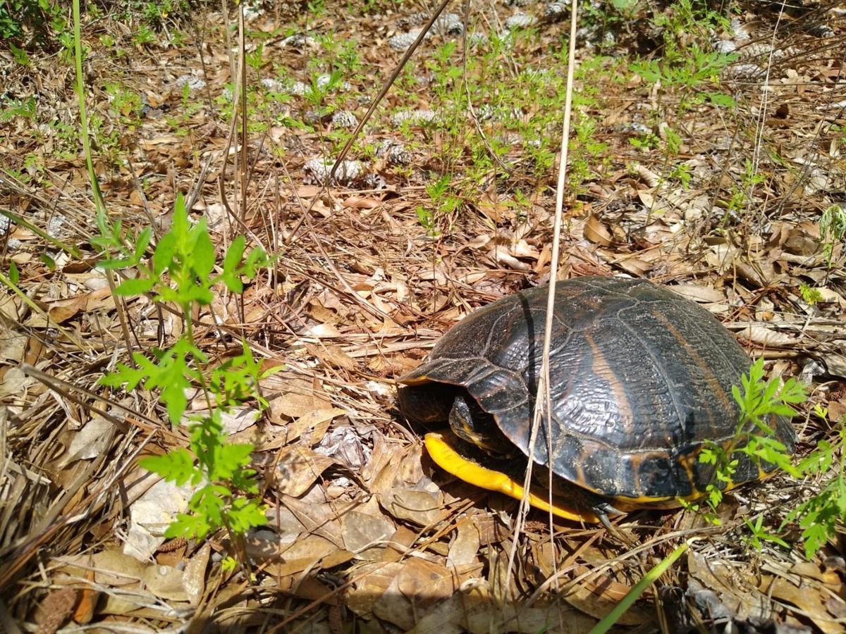 Healthy tortoise