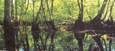Rowesville River Run (copy)