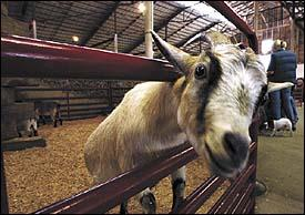 Did you hear …Don't let them 'get your goat'