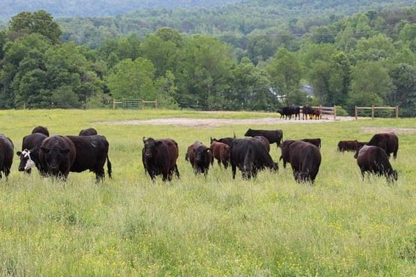 GREENER PASTURES: Family takes leap of faith to leave city life for their farm