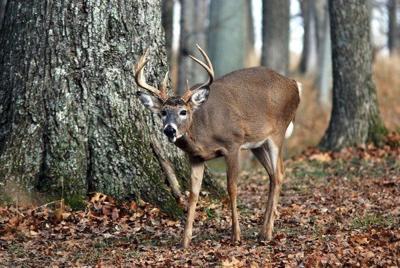 <b>New harvest record set for modern gun deer season</b>