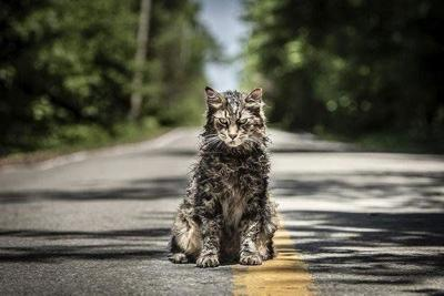 MOVIE REVIEW: Ending sours the soil of 'Pet Sematary'
