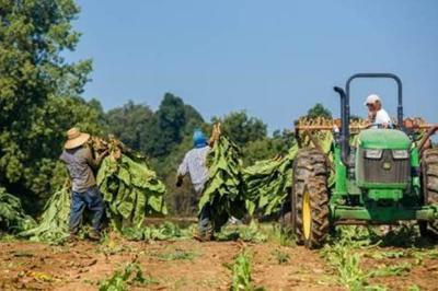 Extension offers information for H-2A workers to keep agriculture operations safe, healthy and running during pandemic