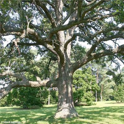 Arbor Day Foundation Announces 2020 Arbor Day Award Winners