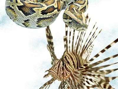 Turning the tables on invasive species