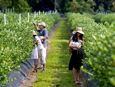 State's spring crops ripe for the picking