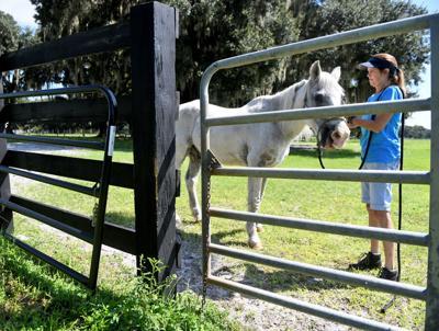 Volunteers find purpose working with horses