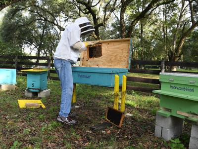 Beekeepers innovate better care for bees