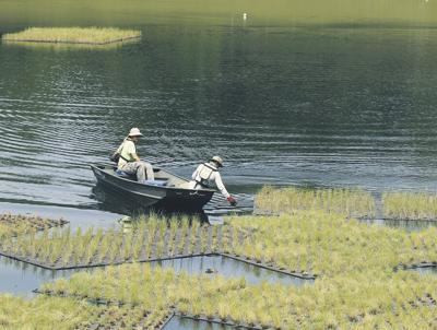 Still fighting Gulf oil spill's lasting impact