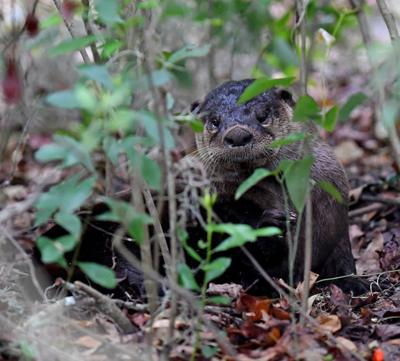 Behind the Lens: Fenney Nature Trail