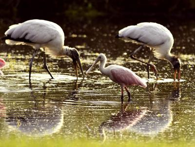 Bird count highlights role of citizen science
