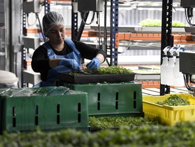 Villages Grown's produce now for sale at Publix
