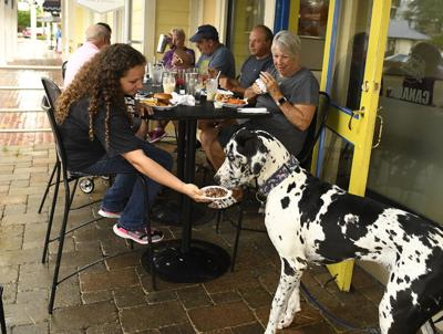 Dogs welcome to chow at local restaurants