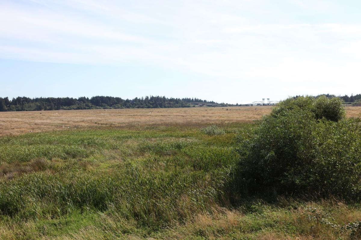 Bandon Marsh overlook