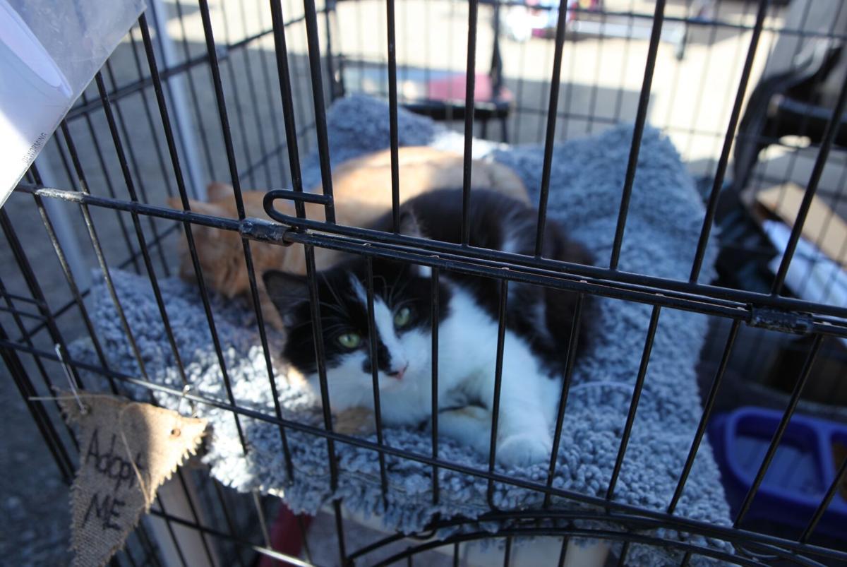 Barktoberfest 2020 - CCAS cats