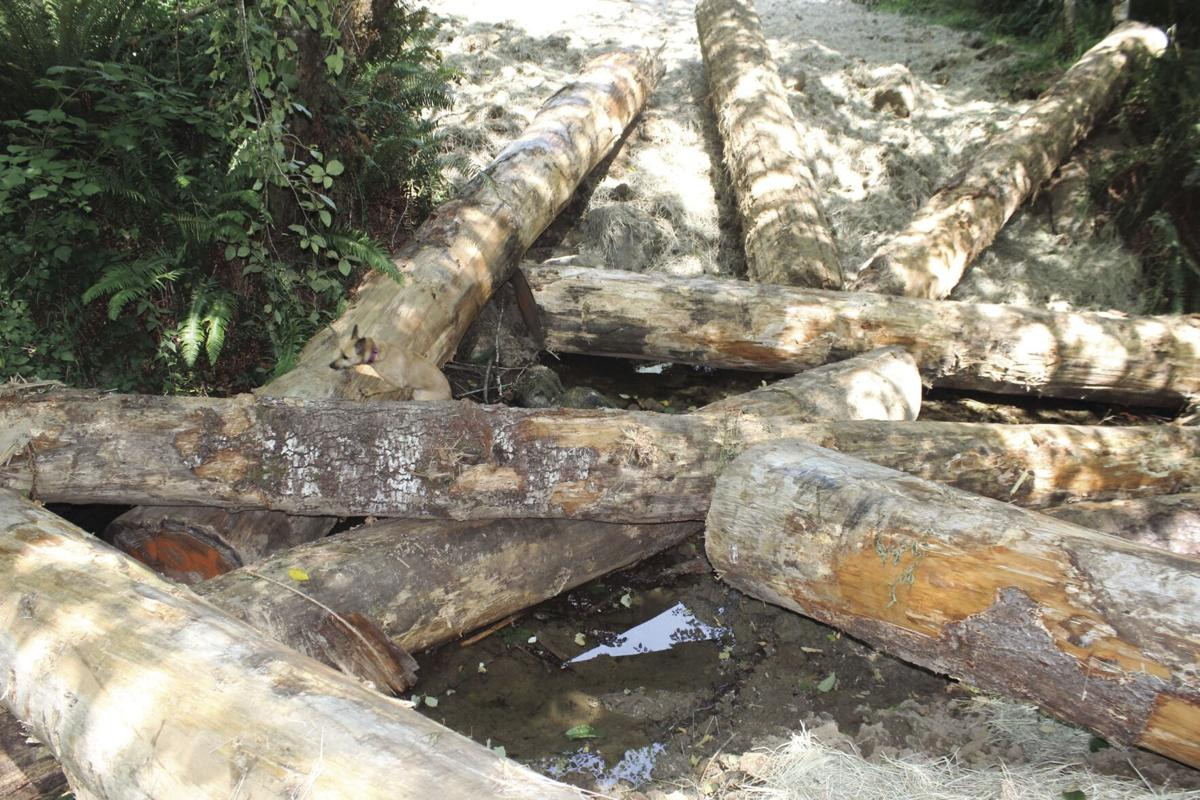 Logs for safety