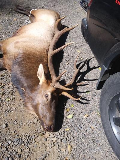 Elk kills hunter