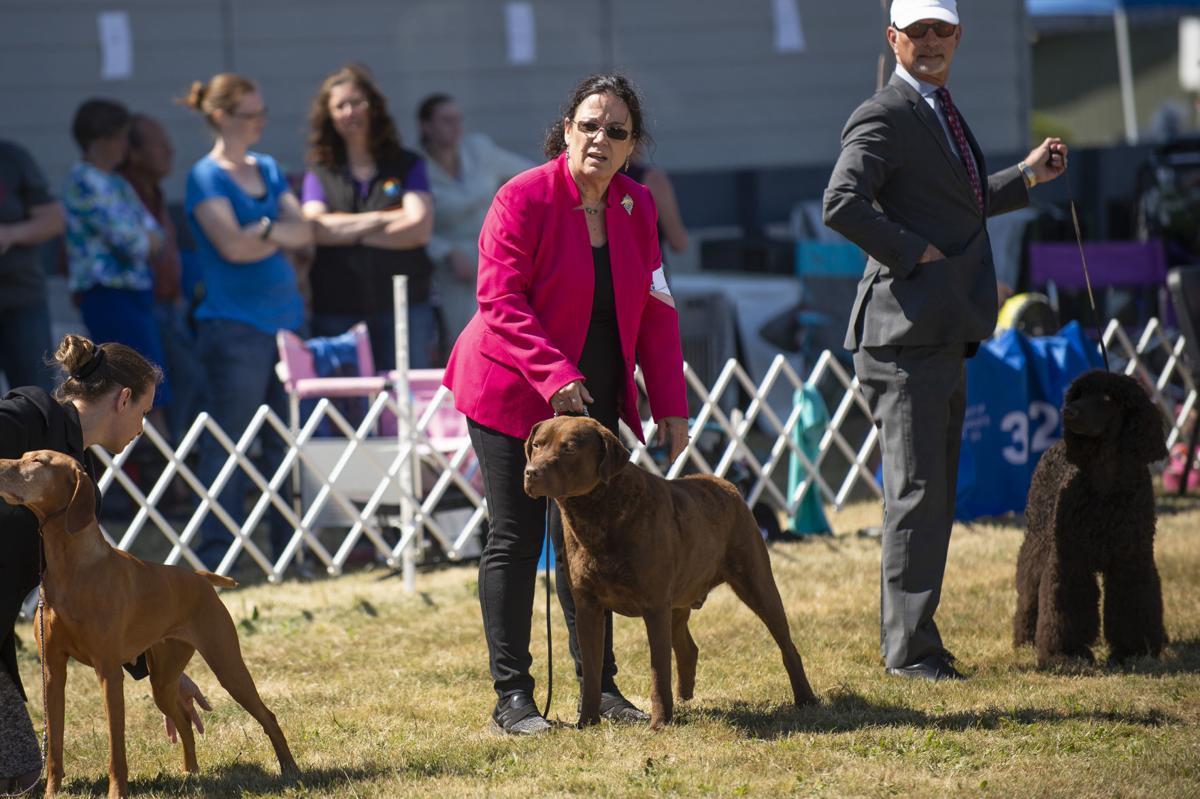 Coos Kennel Club AKC Dog Show