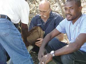 Veterinarian shares skills with Haitians