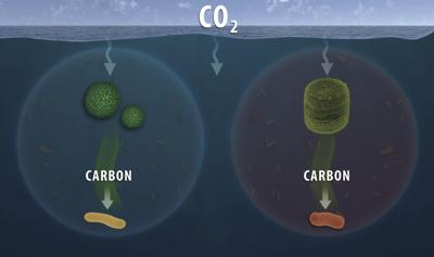 Carbon cycling