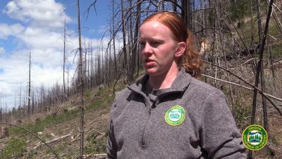 Stewardship Forester Jana Peterson